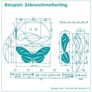 Zebraschmetterling -Goldener Schnitt